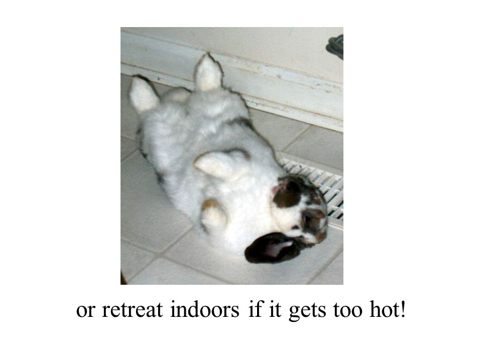 or retreat indoors if it gets too hot!