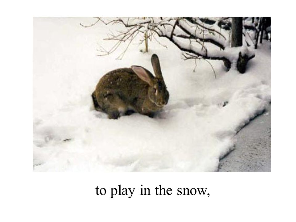 to play in the snow,