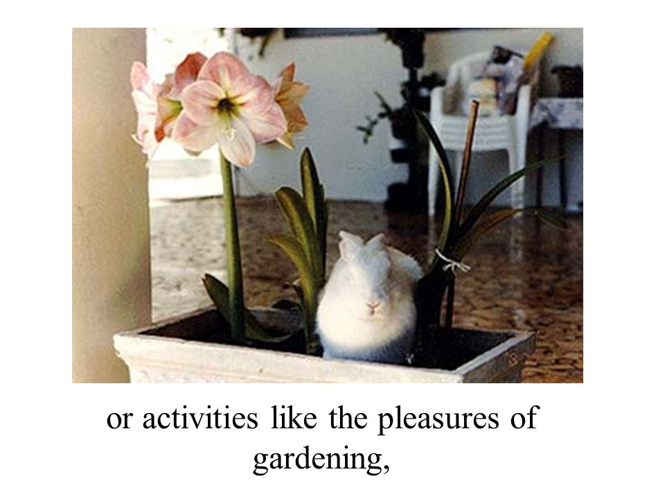 or activities like the pleasures of gardening,