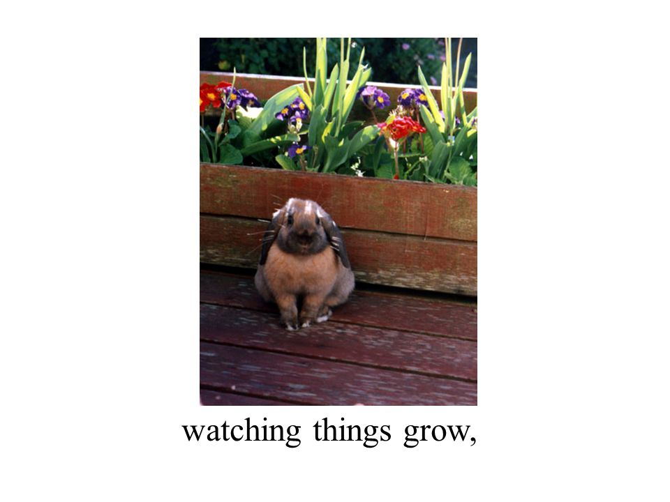 watching things grow,