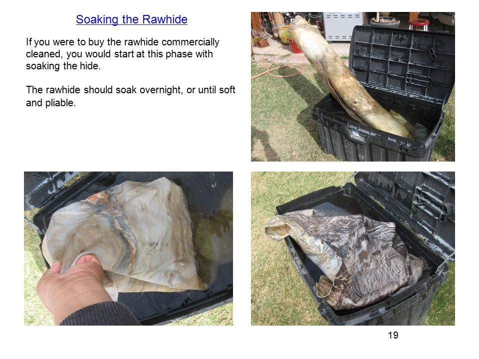 19 If you were to buy the rawhide commercially cleaned, you would start at this phase with soaking the hide.