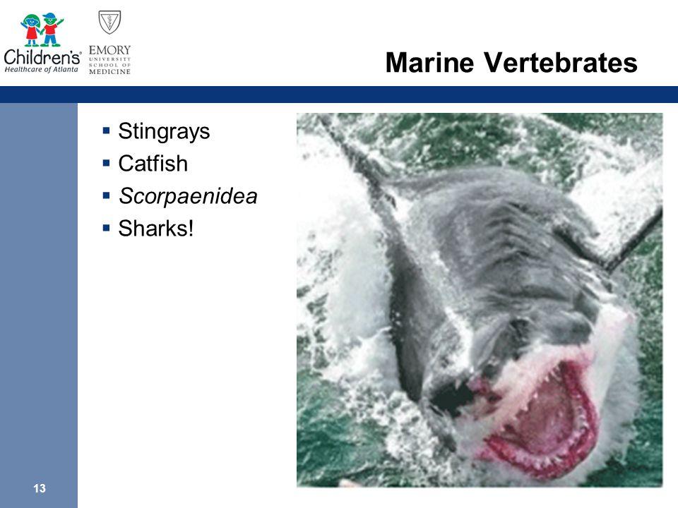 13 Marine Vertebrates  Stingrays  Catfish  Scorpaenidea  Sharks!
