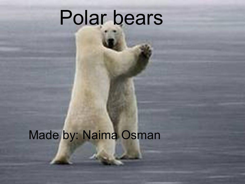 Polar Bears Made by: Naima Osman Polar bears Made by: Naima Osman