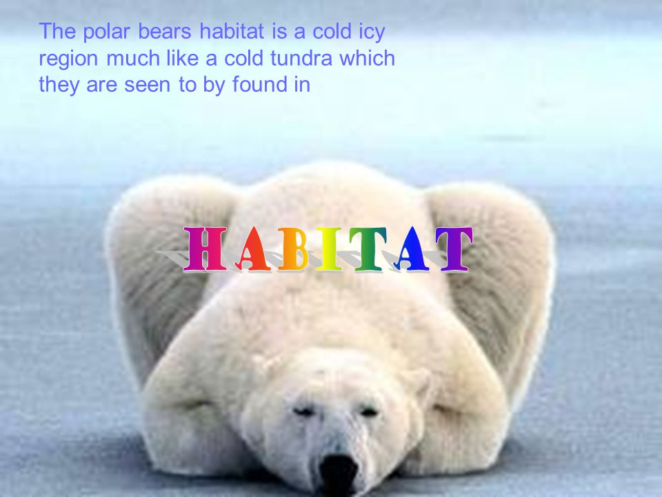 Habitat Part of world: The part of the world were polar bears are commonly found at is icy cold regions, Russia, Alaska, Canada, and, Greenland. Envir