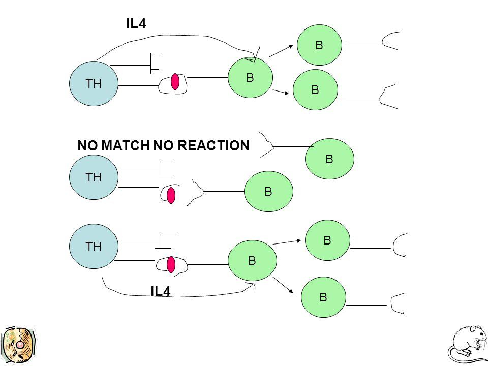 TH B B B B IL4 B B B B NO MATCH NO REACTION