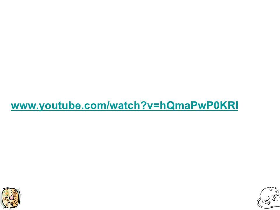 www.youtube.com/watch v=hQmaPwP0KRI