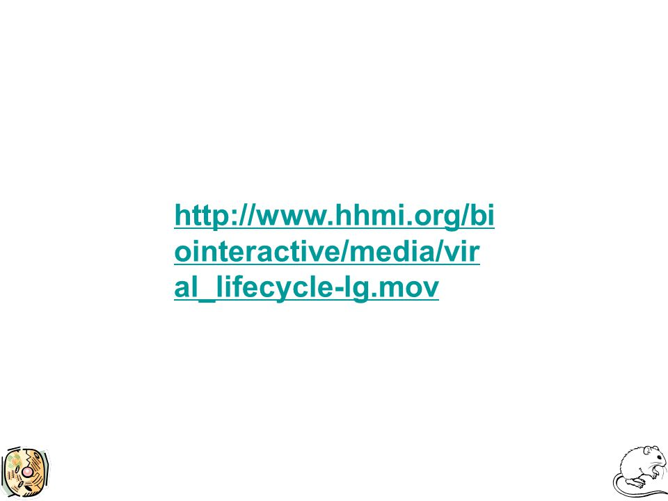 http://www.hhmi.org/bi ointeractive/media/vir al_lifecycle-lg.mov
