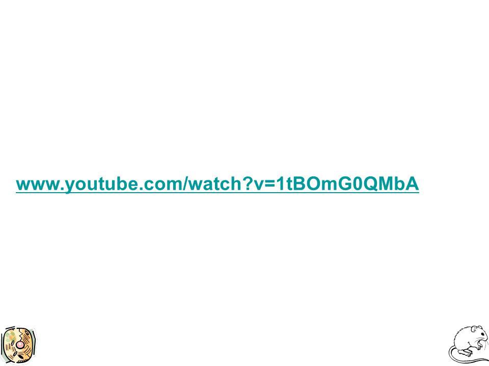 www.youtube.com/watch v=1tBOmG0QMbA