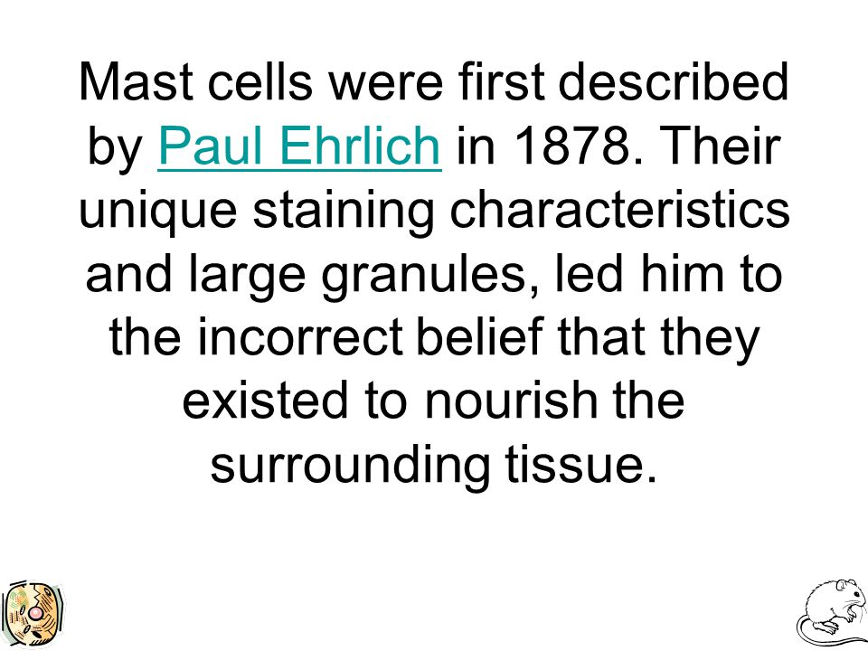 Mast cells were first described by Paul Ehrlich in 1878. Their unique staining characteristics and large granules, led him to the incorrect belief tha