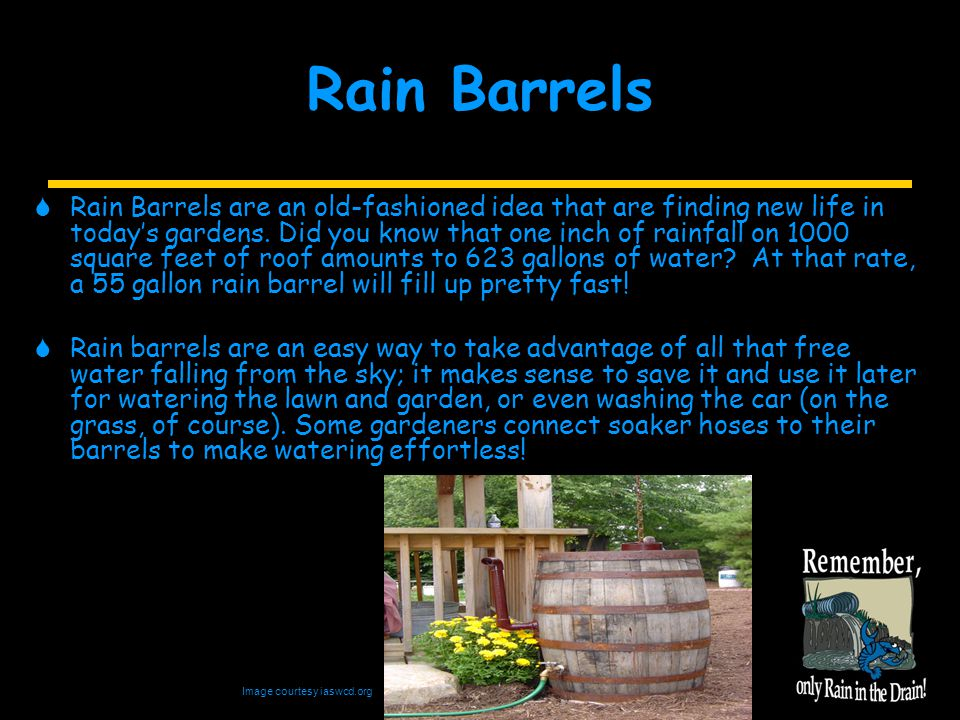 Rain Barrels Image courtesy iaswcd.org  Rain Barrels are an old-fashioned idea that are finding new life in today's gardens.