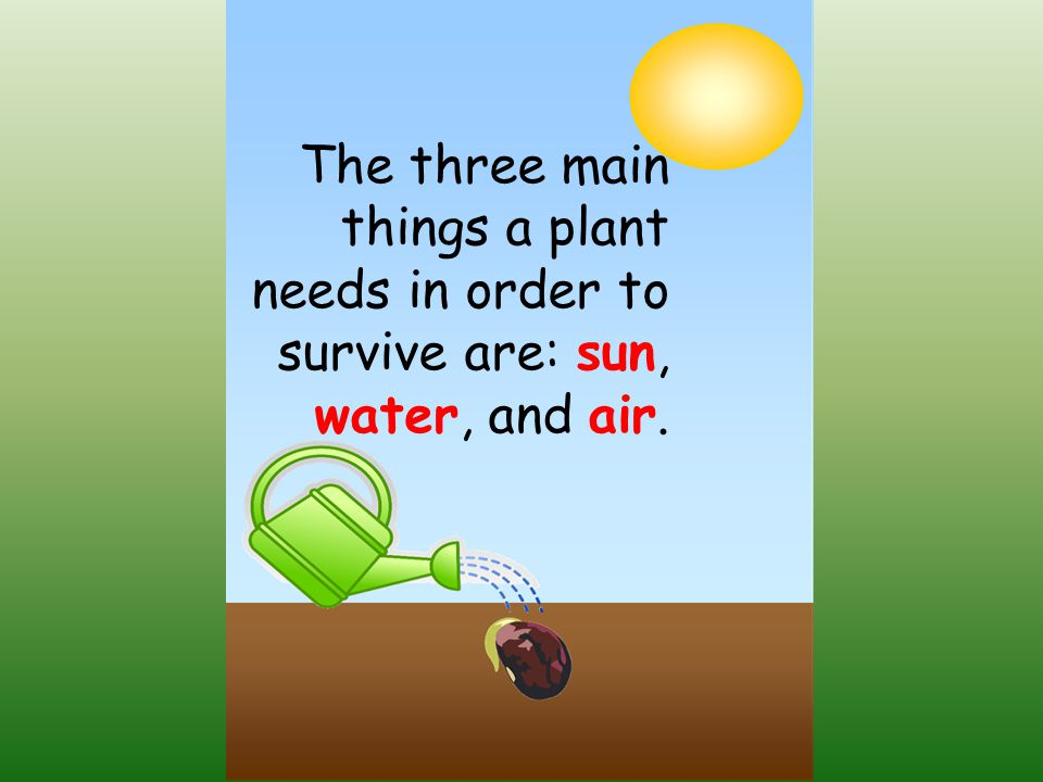 The three main things a plant needs in order to survive are: sun, water, and air.