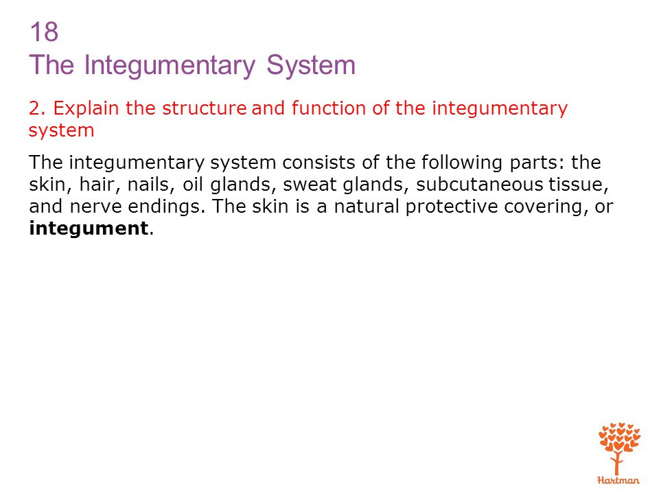 18 The Integumentary System 2. Explain the structure and function of the integumentary system The integumentary system consists of the following parts