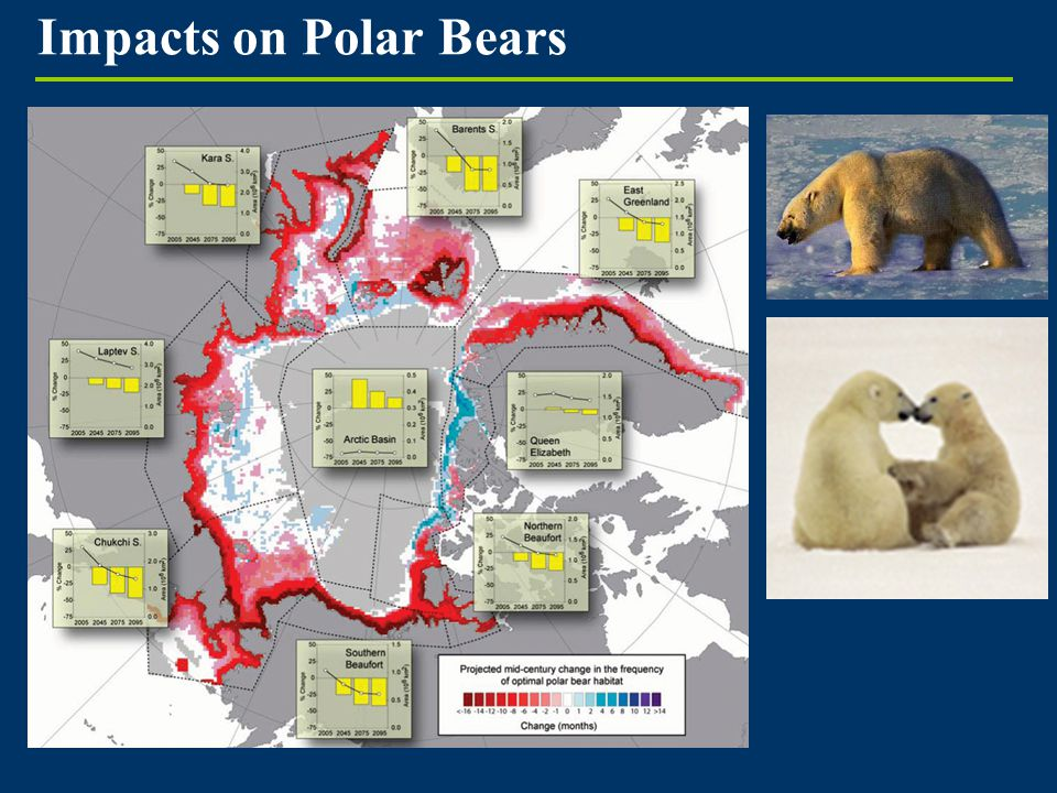 Impacts on Polar Bears