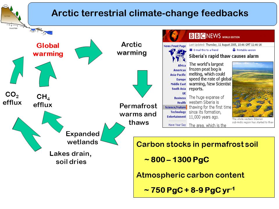 Lakes drain, soil dries Arctic terrestrial climate-change feedbacks CO 2 efflux Global warming CH 4 efflux Expanded wetlands Permafrost warms and thaw