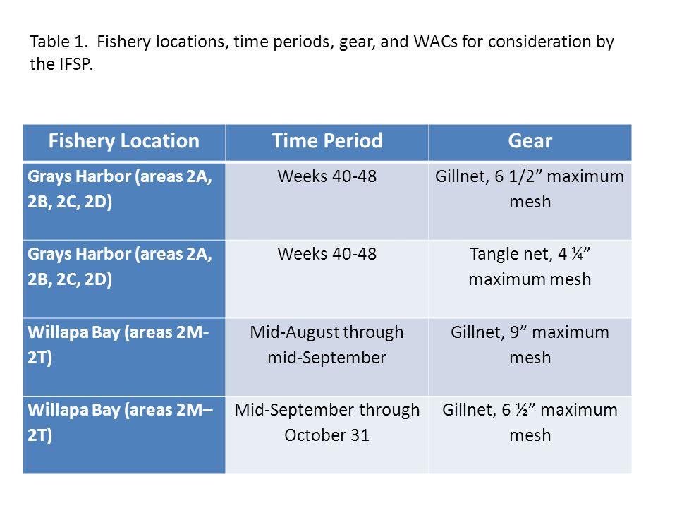 Fishery LocationTime PeriodGear Grays Harbor (areas 2A, 2B, 2C, 2D) Weeks 40-48 Gillnet, 6 1/2 maximum mesh Grays Harbor (areas 2A, 2B, 2C, 2D) Weeks 40-48 Tangle net, 4 ¼ maximum mesh Willapa Bay (areas 2M- 2T) Mid-August through mid-September Gillnet, 9 maximum mesh Willapa Bay (areas 2M– 2T) Mid-September through October 31 Gillnet, 6 ½ maximum mesh Table 1.