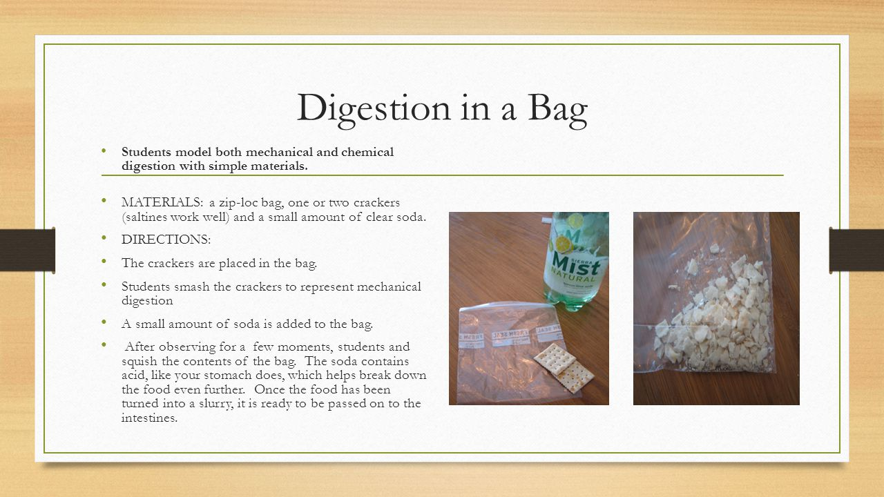 Digestion in a Bag Students model both mechanical and chemical digestion with simple materials.