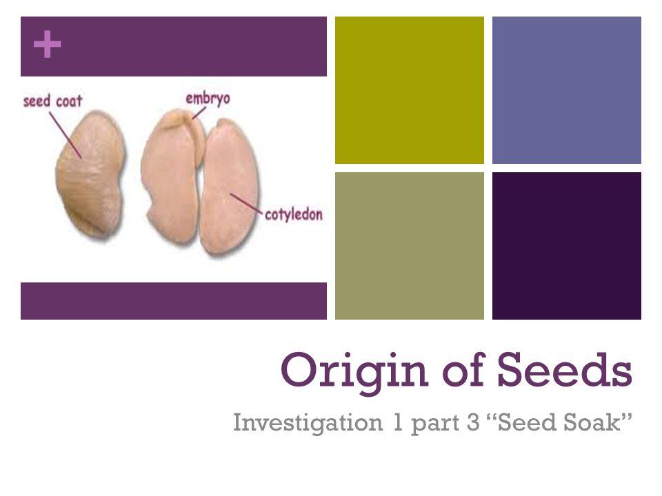 + Origin of Seeds Investigation 1 part 3 Seed Soak