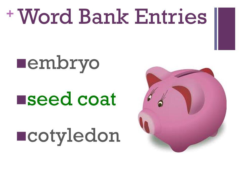 + Word Bank Entries embryo seed coat cotyledon