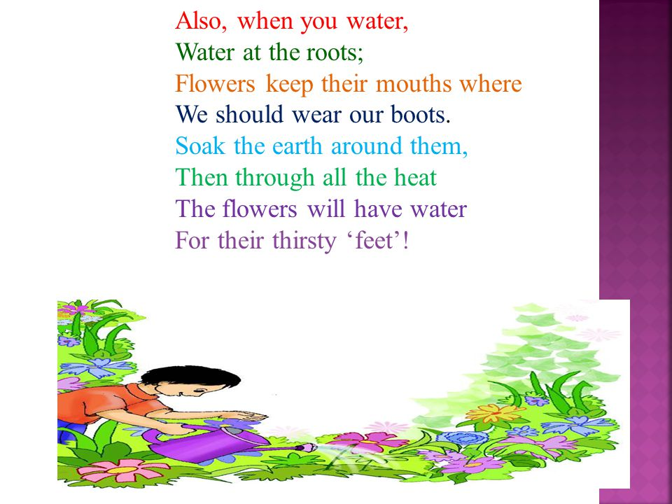 A WATERING RHYME Early in the morning, Or the evening hour, Are the times to water Every kind of flower. Watering at noonday, When the sun is high, Do