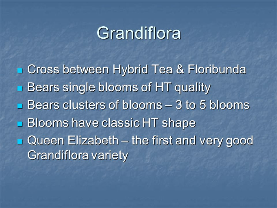 Grandiflora Cross between Hybrid Tea & Floribunda Cross between Hybrid Tea & Floribunda Bears single blooms of HT quality Bears single blooms of HT quality Bears clusters of blooms – 3 to 5 blooms Bears clusters of blooms – 3 to 5 blooms Blooms have classic HT shape Blooms have classic HT shape Queen Elizabeth – the first and very good Grandiflora variety Queen Elizabeth – the first and very good Grandiflora variety