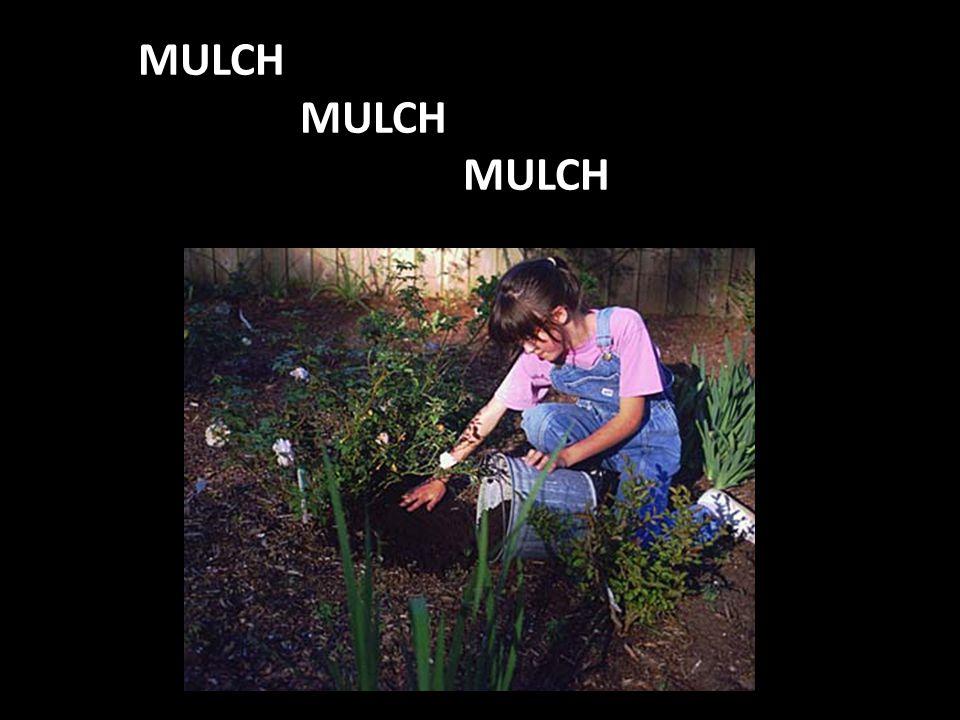 MULCH MULCH MULCH