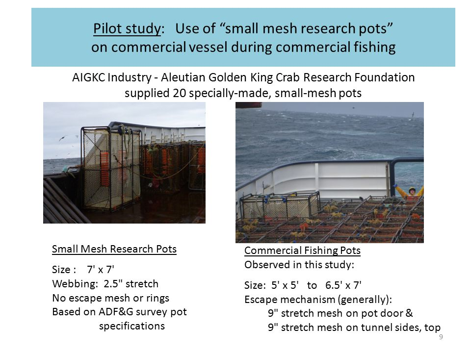 9 AIGKC Industry - Aleutian Golden King Crab Research Foundation supplied 20 specially-made, small-mesh pots Pilot study: Use of small mesh research pots on commercial vessel during commercial fishing Small Mesh Research Pots Size : 7 x 7 Webbing: 2.5 stretch No escape mesh or rings Based on ADF&G survey pot specifications Commercial Fishing Pots Observed in this study: Size: 5 x 5 to 6.5 x 7 Escape mechanism (generally): 9 stretch mesh on pot door & 9 stretch mesh on tunnel sides, top