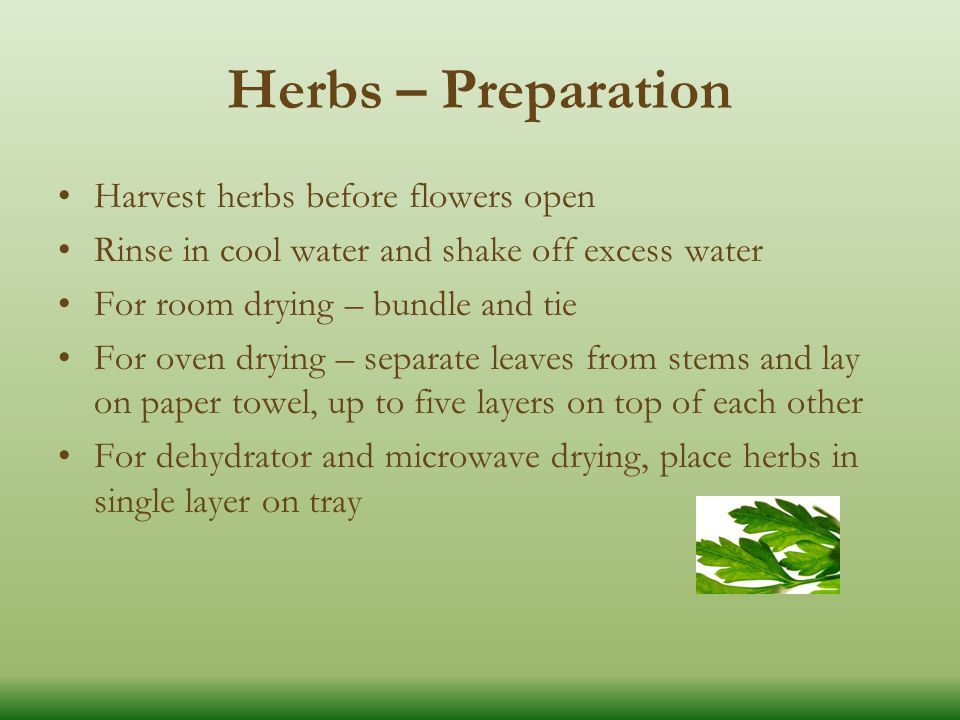 Herbs – Preparation Harvest herbs before flowers open Rinse in cool water and shake off excess water For room drying – bundle and tie For oven drying – separate leaves from stems and lay on paper towel, up to five layers on top of each other For dehydrator and microwave drying, place herbs in single layer on tray