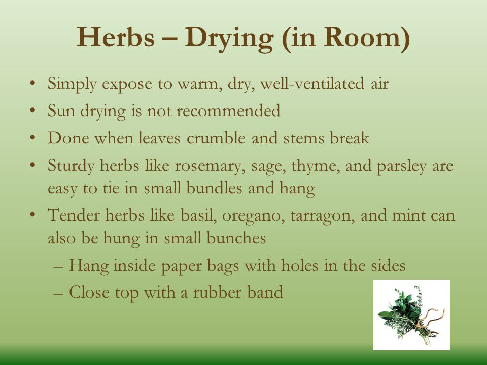 Herbs – Drying (in Room) Simply expose to warm, dry, well-ventilated air Sun drying is not recommended Done when leaves crumble and stems break Sturdy herbs like rosemary, sage, thyme, and parsley are easy to tie in small bundles and hang Tender herbs like basil, oregano, tarragon, and mint can also be hung in small bunches –Hang inside paper bags with holes in the sides –Close top with a rubber band