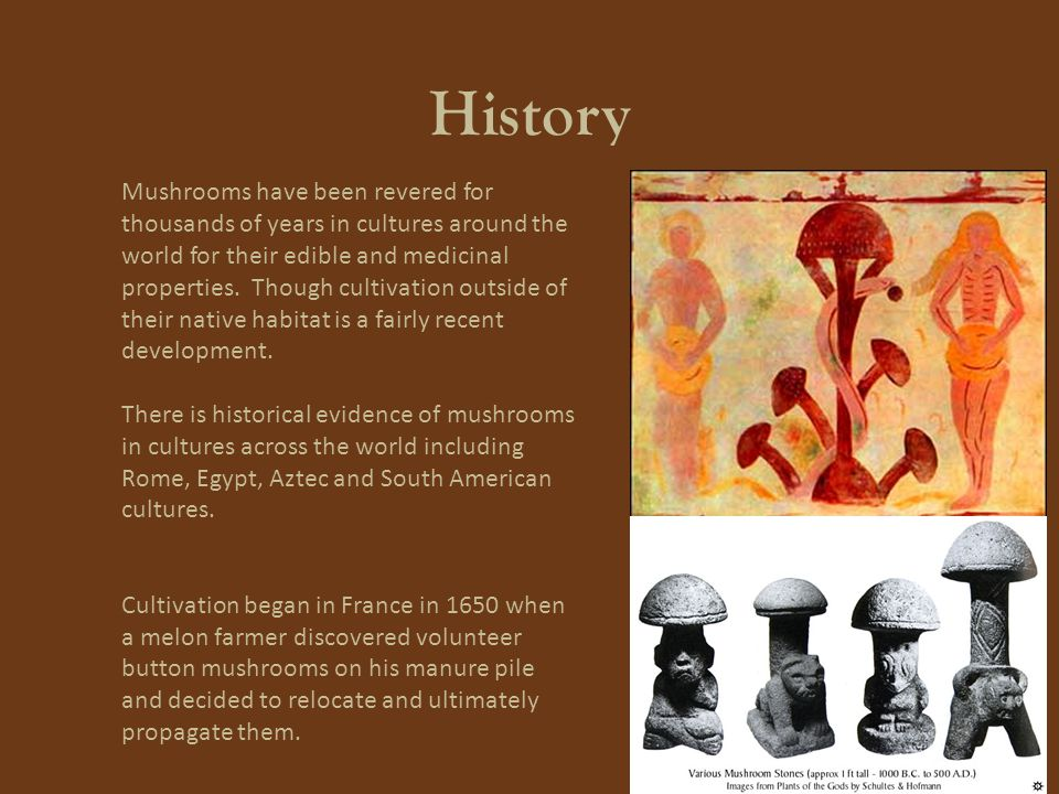 History Mushrooms have been revered for thousands of years in cultures around the world for their edible and medicinal properties.