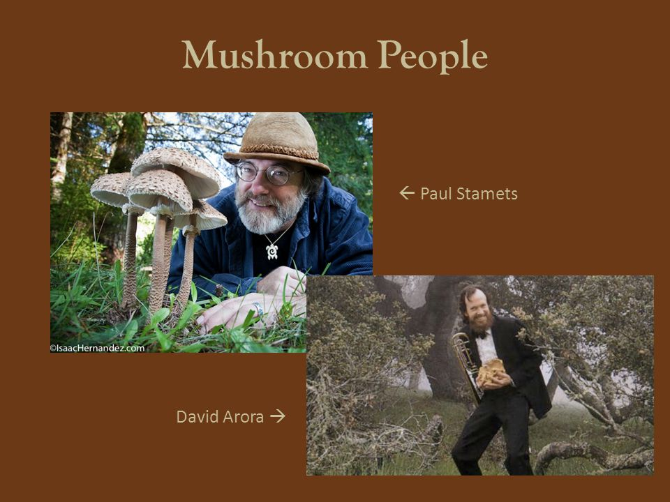 Mushroom People  Paul Stamets David Arora 