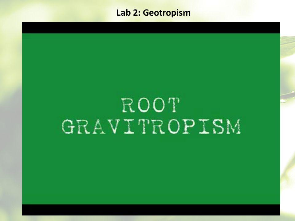 Lab 2: Geotropism