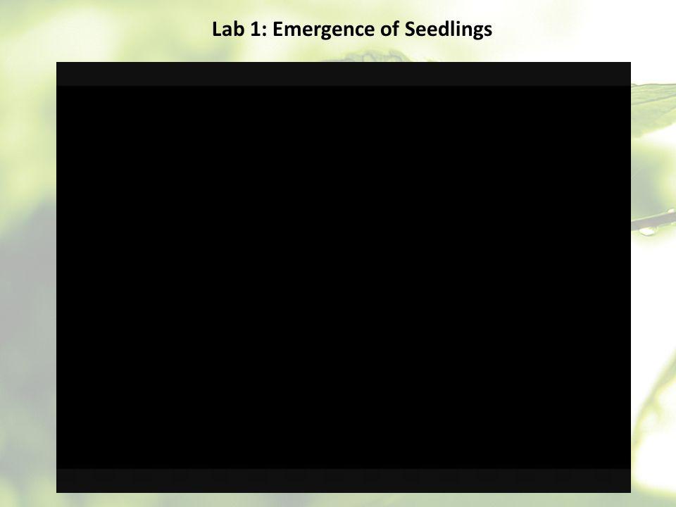 Lab 1: Emergence of Seedlings