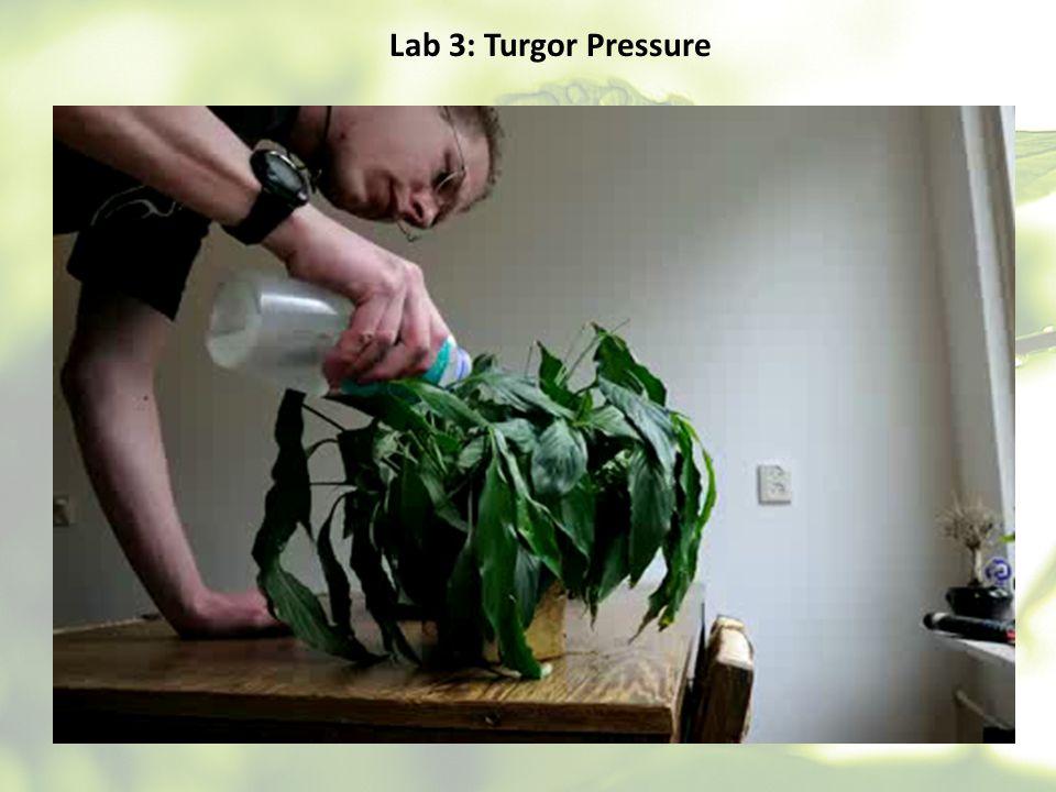 Lab 3: Turgor Pressure
