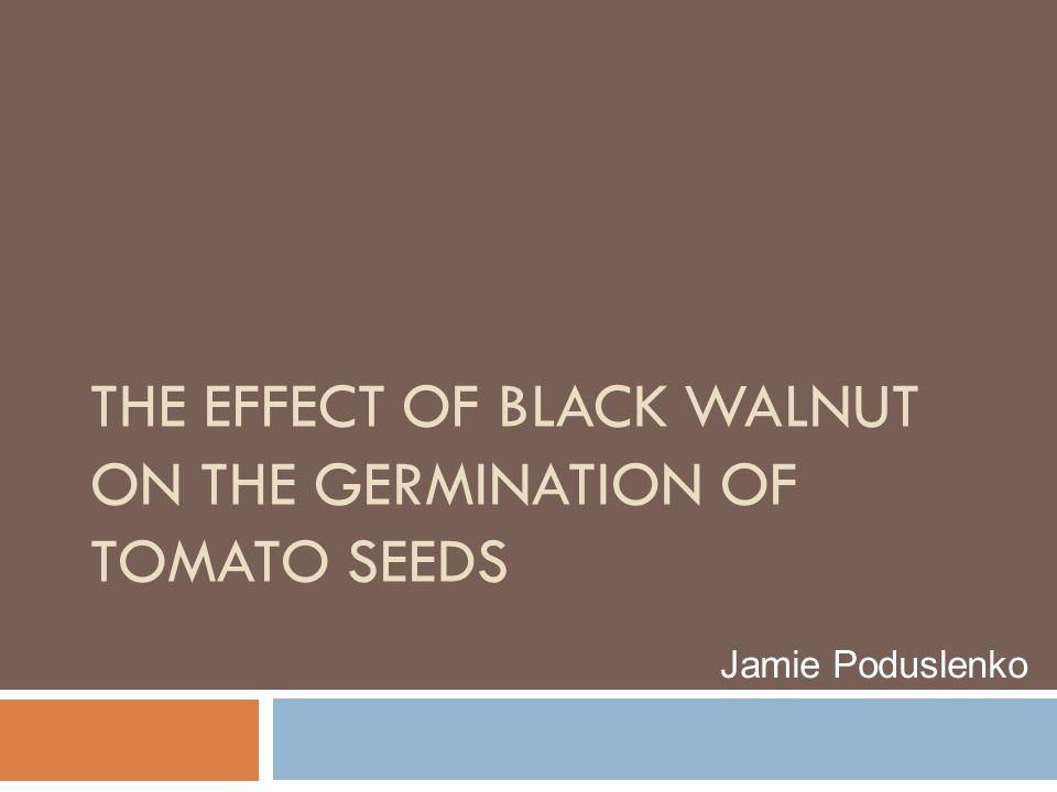 THE EFFECT OF BLACK WALNUT ON THE GERMINATION OF TOMATO SEEDS Jamie Poduslenko