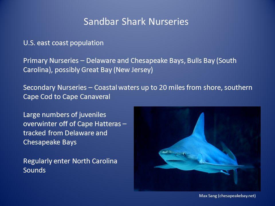 Sandbar Shark Nurseries Primary Nurseries – Delaware and Chesapeake Bays, Bulls Bay (South Carolina), possibly Great Bay (New Jersey) U.S.