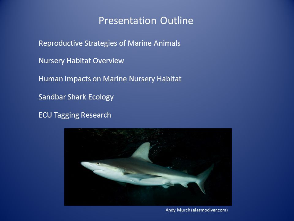 Presentation Outline Reproductive Strategies of Marine Animals Nursery Habitat Overview Sandbar Shark Ecology Human Impacts on Marine Nursery Habitat ECU Tagging Research Andy Murch (elasmodiver.com)