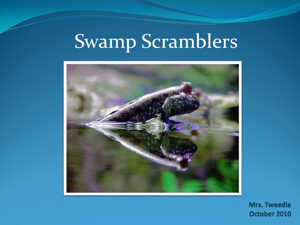 Swamp Scramblers