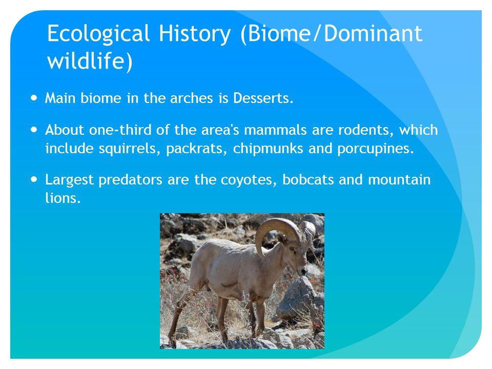 Endemic Species Desert Bighorn Sheep- no longer endangered Mule Deer Western Collard Lizard Kangaroo Rats Datura (plant) Cacti