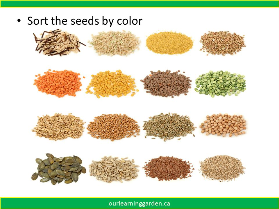 ourlearninggarden.ca Sort the seeds by color