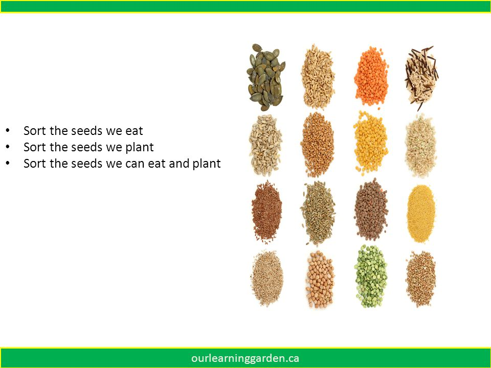 ourlearninggarden.ca Sort the seeds we eat Sort the seeds we plant Sort the seeds we can eat and plant
