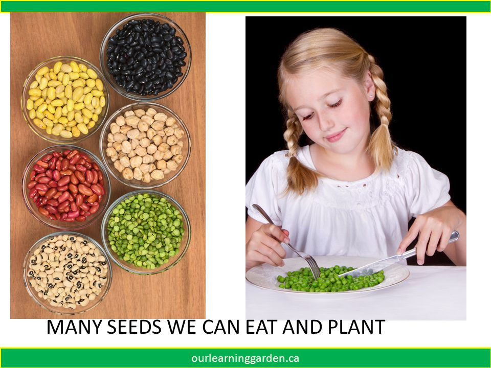 ourlearninggarden.ca MANY SEEDS WE CAN EAT AND PLANT