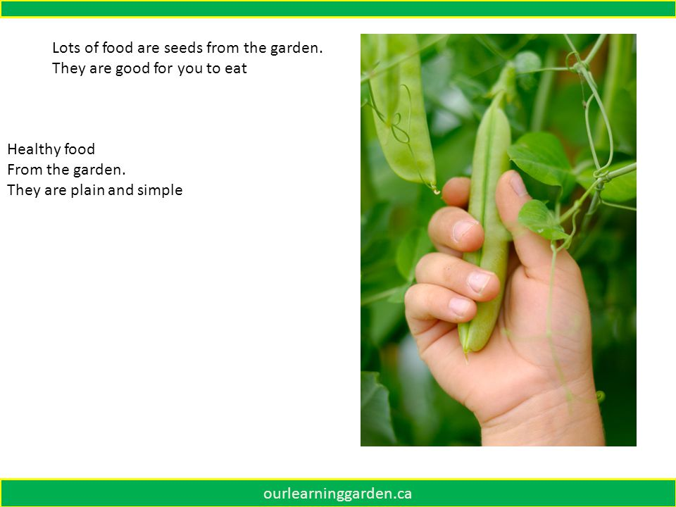 ourlearninggarden.ca Lots of food are seeds from the garden.