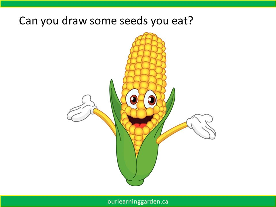 ourlearninggarden.ca Can you draw some seeds you eat?
