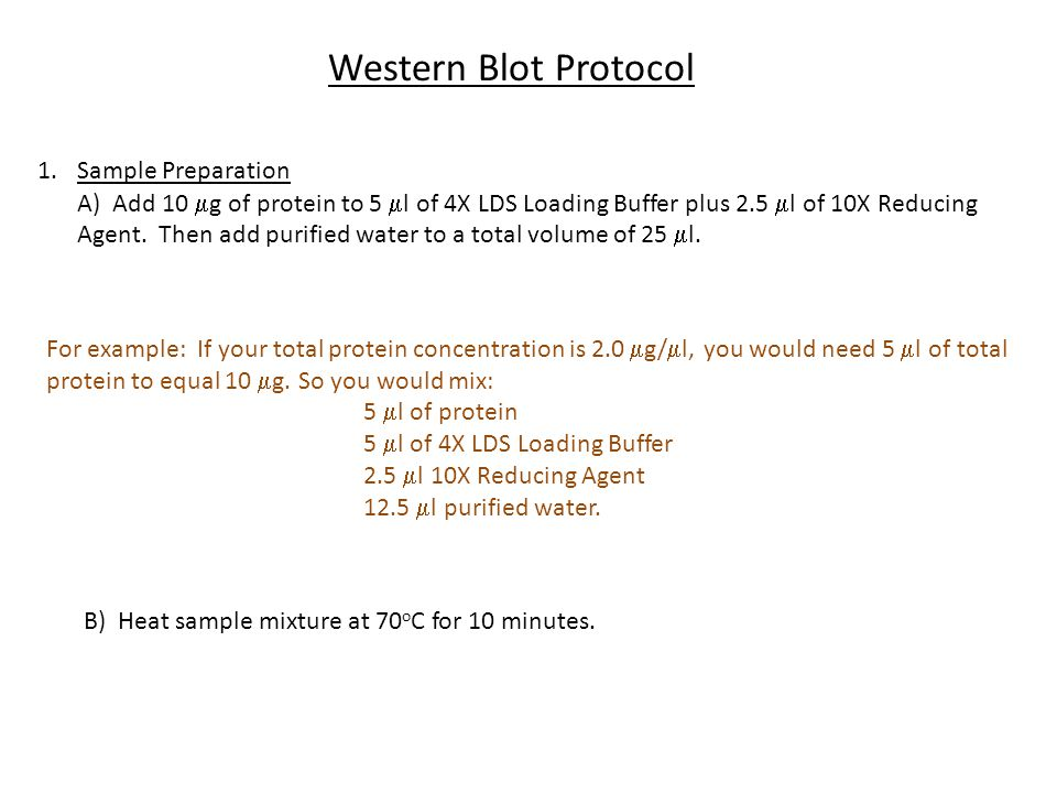 Western Blot Protocol 1.Sample Preparation A) Add 10  g of protein to 5  l of 4X LDS Loading Buffer plus 2.5  l of 10X Reducing Agent. Then add pur