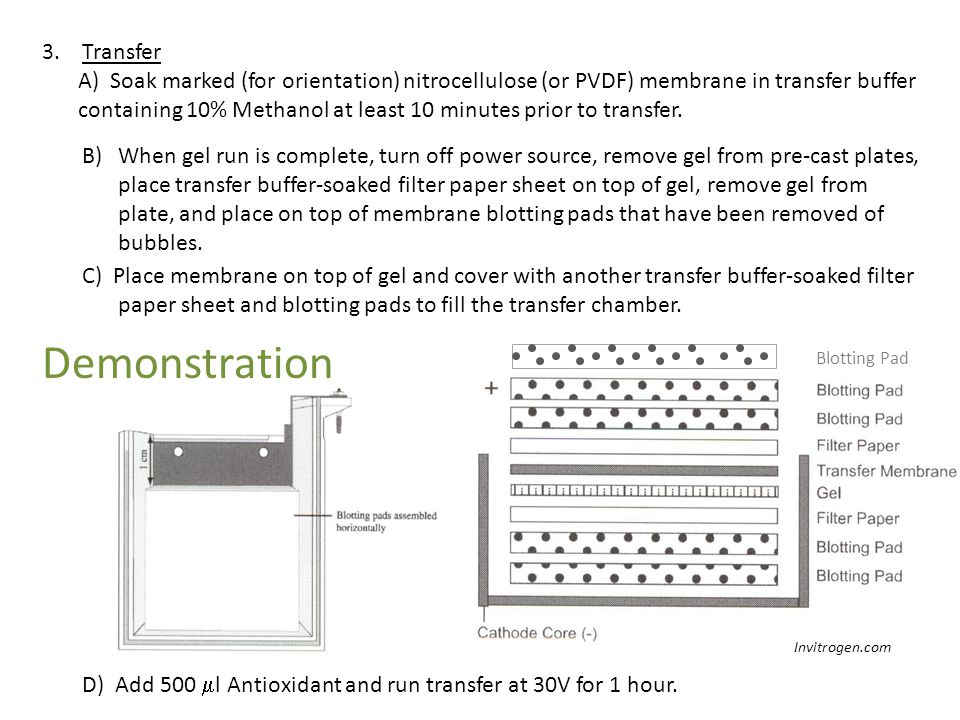 3. Transfer A) Soak marked (for orientation) nitrocellulose (or PVDF) membrane in transfer buffer containing 10% Methanol at least 10 minutes prior to