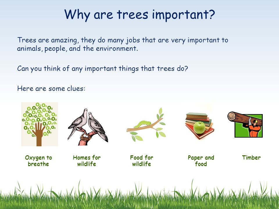Trees are amazing, they do many jobs that are very important to animals, people, and the environment.