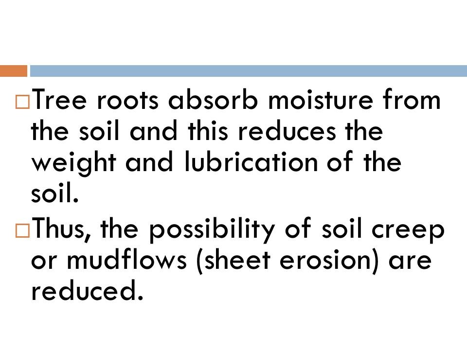  Tree roots absorb moisture from the soil and this reduces the weight and lubrication of the soil.  Thus, the possibility of soil creep or mudflows