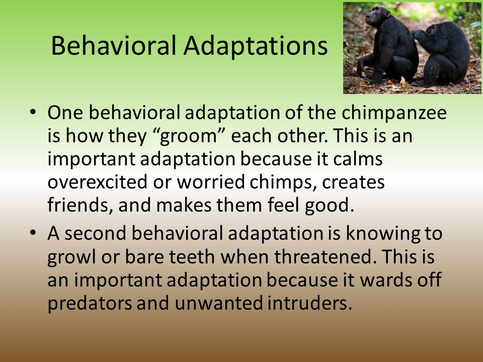 Structural Adaptations A third structural adaptation is their sharp teeth.