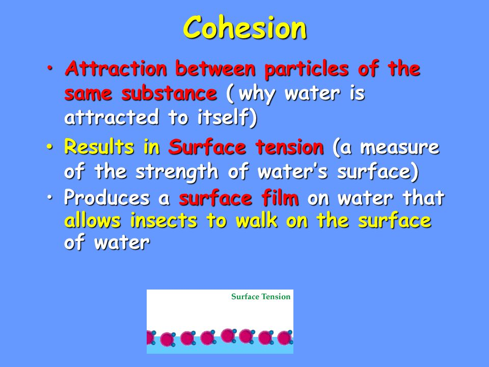 Cohesion Attraction between particles of the same substance (why water is attracted to itself)Attraction between particles of the same substance ( why water is attracted to itself) Results in Surface tension (a measure of the strength of water's surface) Results in Surface tension (a measure of the strength of water's surface) Produces a surface film on water that allows insects to walk on the surface of waterProduces a surface film on water that allows insects to walk on the surface of water