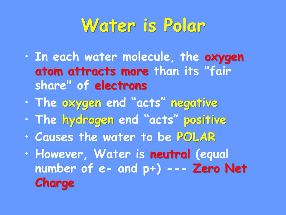 Water is Polar oxygen atom attracts more electronsIn each water molecule, the oxygen atom attracts more than its fair share of electrons oxygennegativeThe oxygen end acts negative hydrogenpositiveThe hydrogen end acts positive POLARCauses the water to be POLAR neutral Zero Net ChargeHowever, Water is neutral (equal number of e- and p+) --- Zero Net Charge